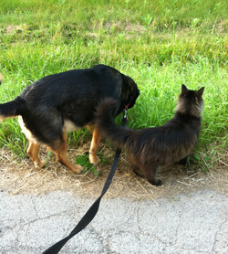 Callie & Clyde