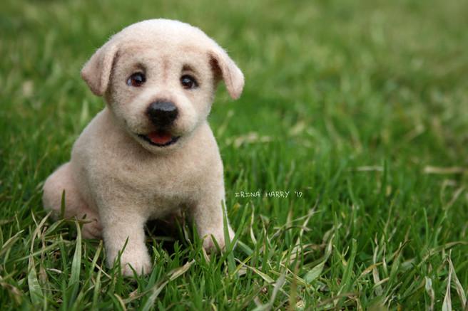 Labrador love.