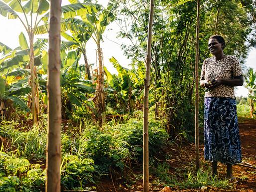 Mercado Internacional e Agrobiodiversidade: oportunidades de negócios para o Brasil