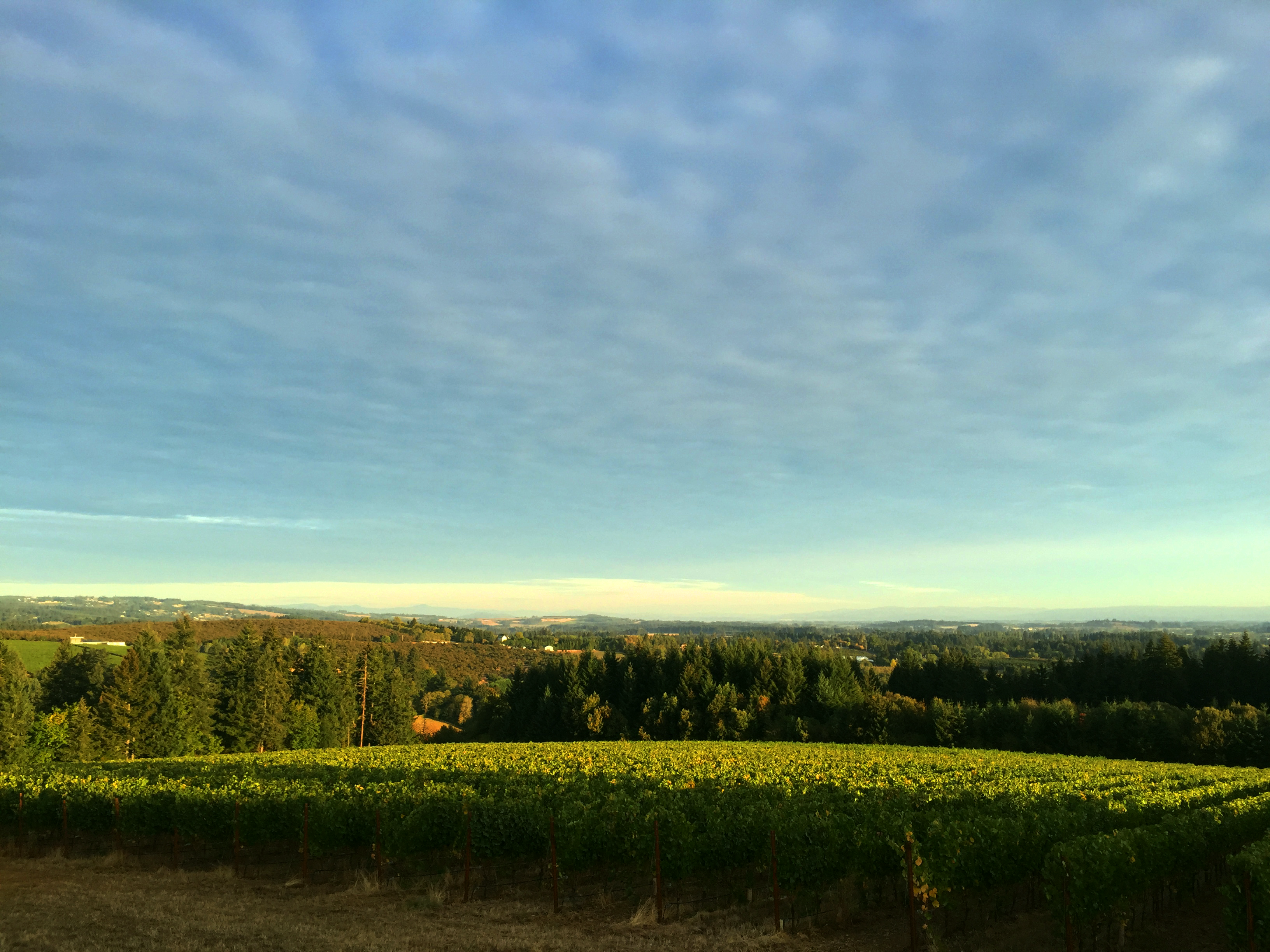 Vineyard View