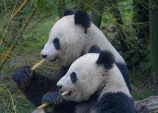 panda-3811734_640.jpg