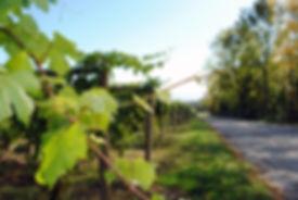 Red Tail Ridge Vineyard