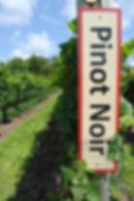 Pinot Noir at RTR