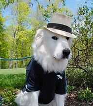 Winery Dog Bueller