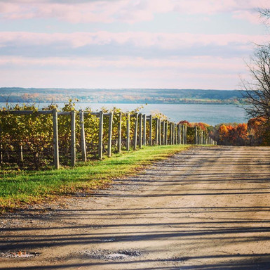 Road leading up to the vineyard