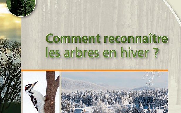 Comment reconnaitre les arbres en hiver?