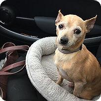 image: dog in car