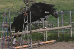 Free-jumping shot
