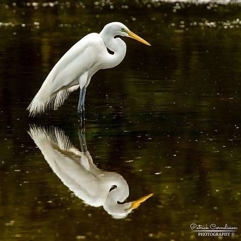 Reflective Nature