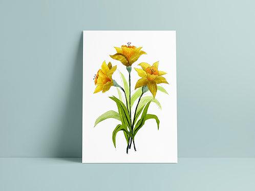 Daffodil White Art Print