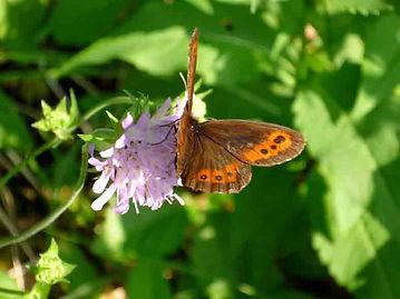 Papillon-lac-Maclus.jpg