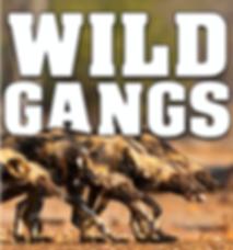 Wild Gangs West One Internatioanl