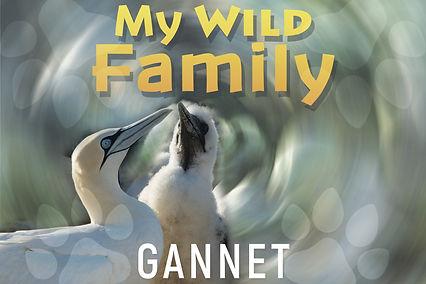 My wild family - gannet-wide.jpg