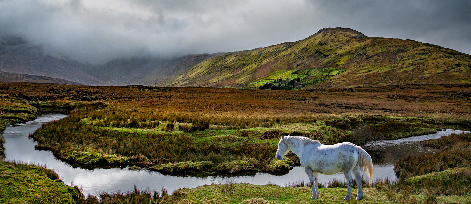 'You can Lead a Horse to Water' by Raymond Hughes (9 marks)  -  Merville Newtownabbey Photographic Club