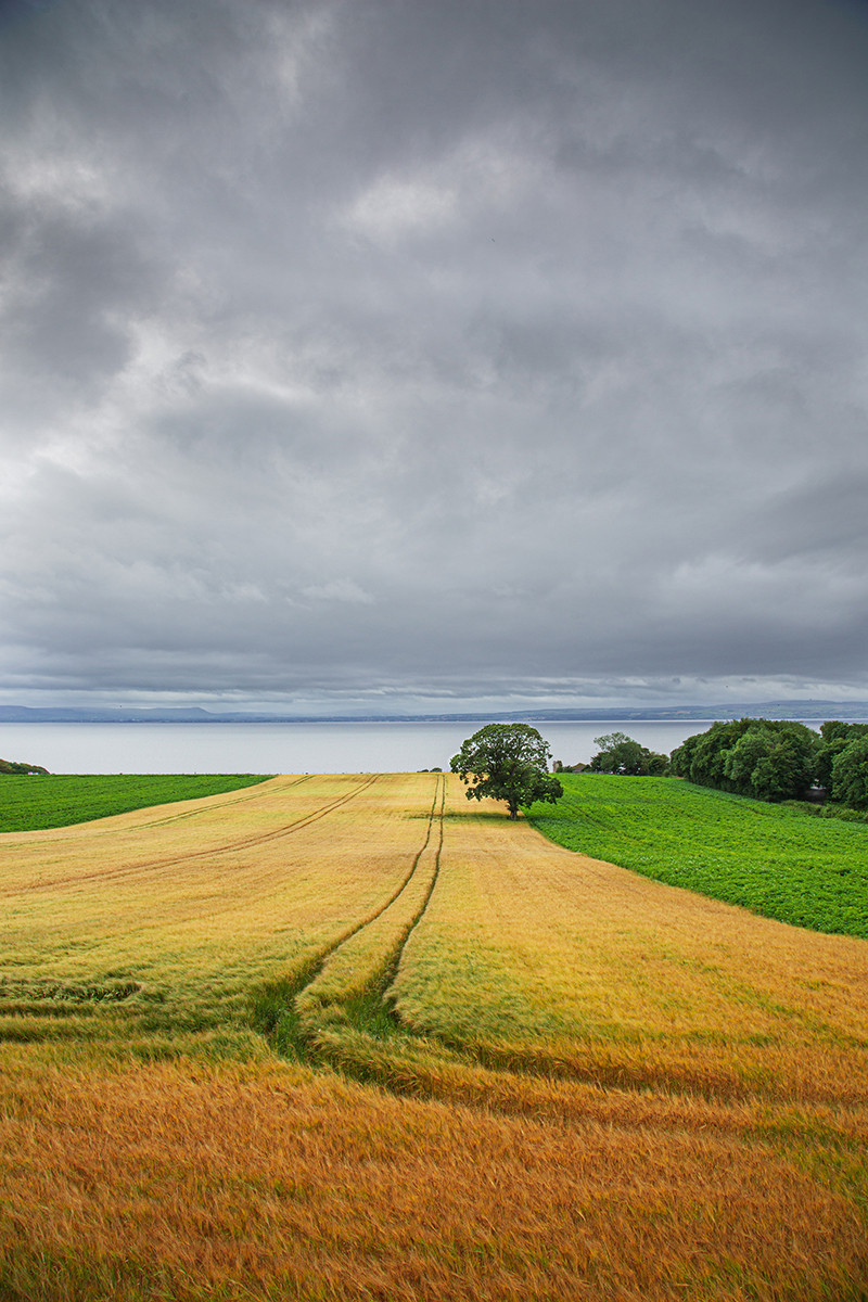 'Barley Field at Redcastle' by Raymond Hughes ( 11 marks )