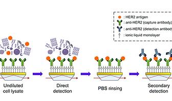 Bioanalytical Protein detection