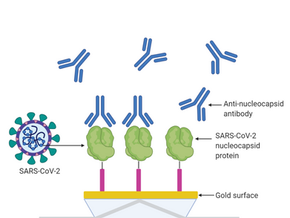 Rapid Quality Control of Antibodies Using P4SPR™