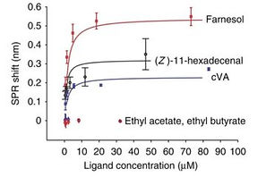 Bioanalytical Small peptide detection