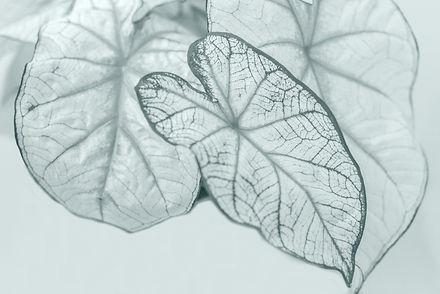 planta3_edited_edited_edited.jpg