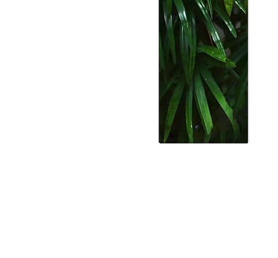 A geometric shape of green leaves