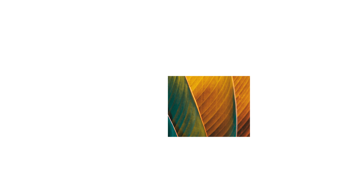 Extreme close up of a leaf, with an orange and green filter.