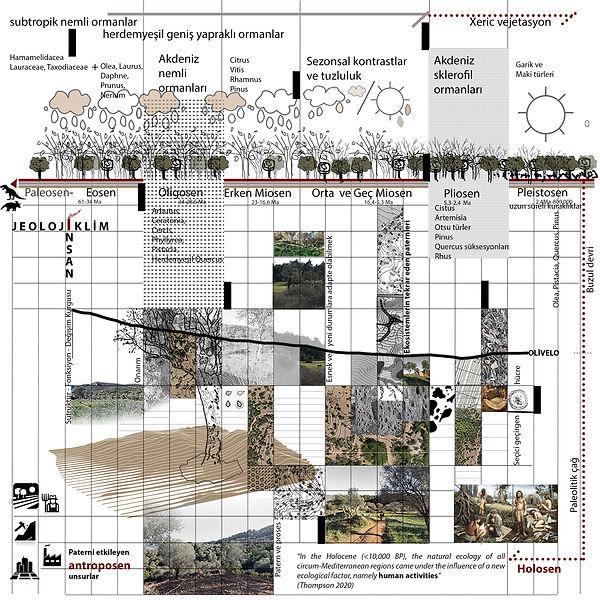 olivelo-habitat- analiz (1).jpg