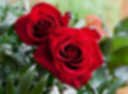rose-plant.jpg