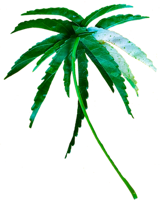 LeafPalmTree.png
