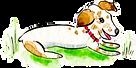 Spirit the dog