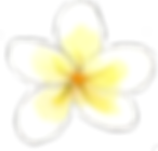 Frangipani flower of Seychelles