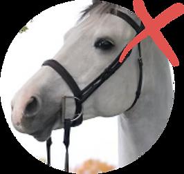 horse_cutoff.png