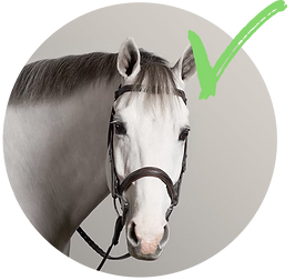 Horse_perfect.png