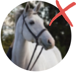 horse_blurry.png