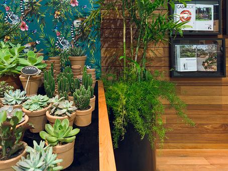 Paisagista Ricardo Pessuto fala sobre os benefícios da natureza dentro de casa