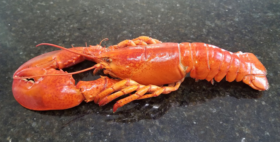 Lobster(Grade A, Whole, Cooked))