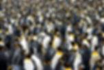 FSG_king_penguins3.jpg