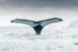 Page_25_Whale-Fluke.jpg