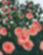 Screen Shot 2019-05-16 at 1.05.49 PM.png
