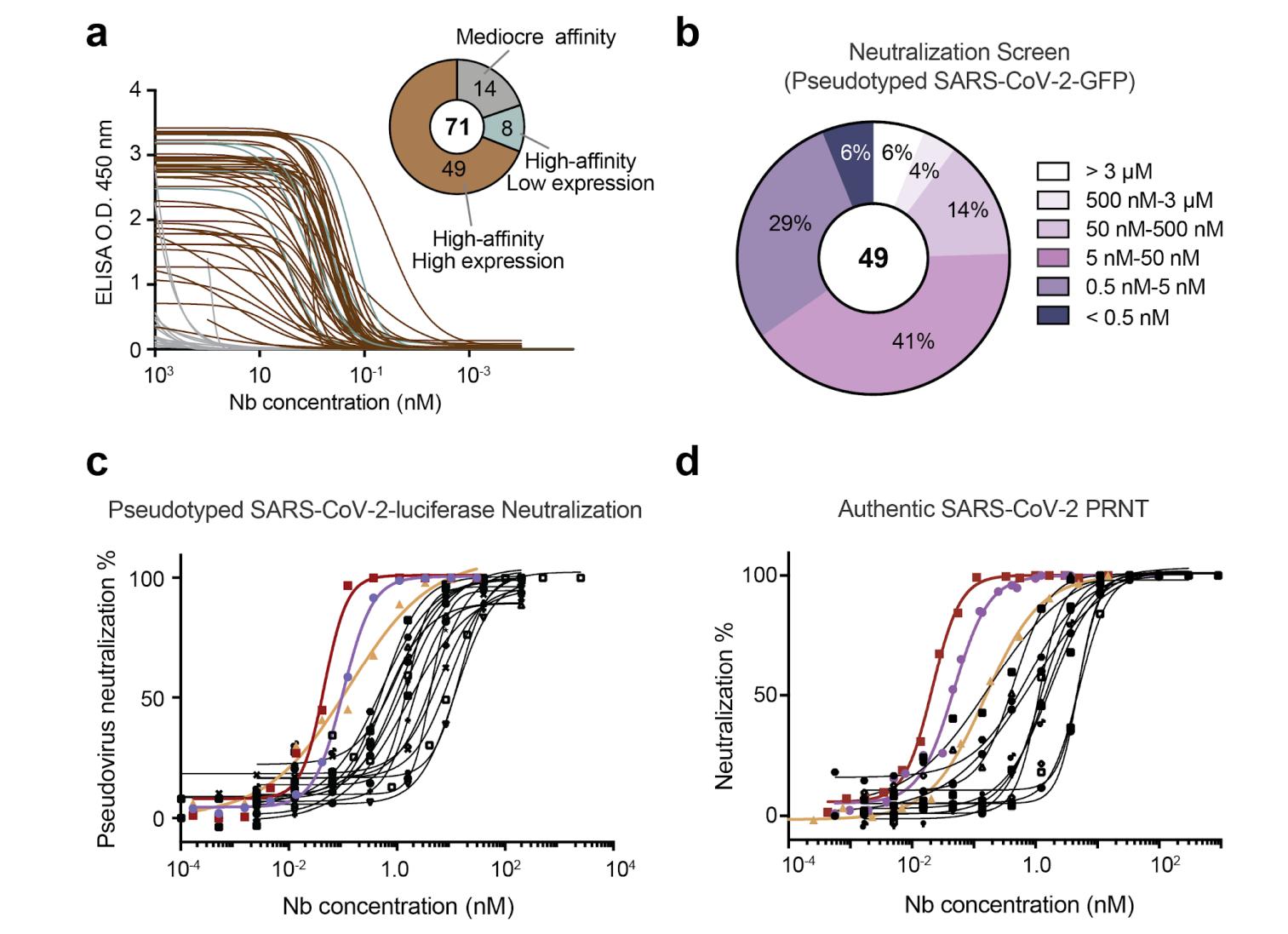 SARS-CoV-2 neut nanobodies