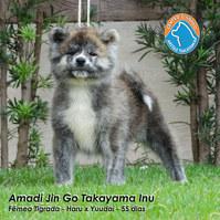 1290 - AMADI JIN.JPG