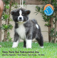 1421 - TARO TORA.JPG