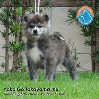 1412 - YOKO.JPG