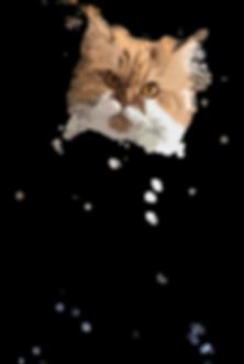 Kittys Kopf.png