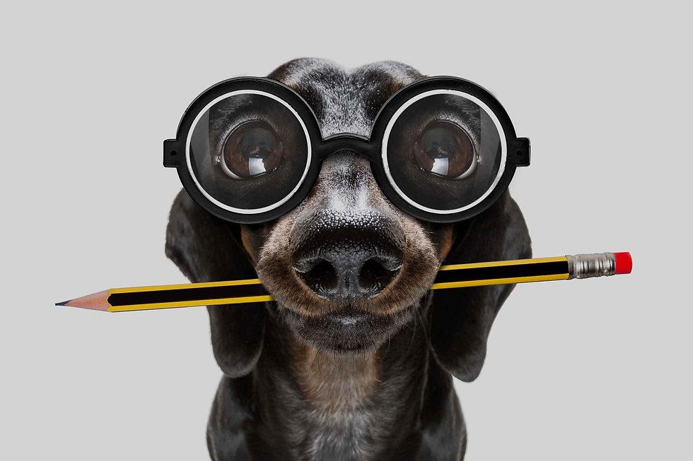 En la imagen aparece un perro salchicha con unas gafas. El perro salchicha es el isotipo de nuestra empresa sobre management para hoteles y restaurantes. Damos un amplio abánico de posibilidades a los dueños de este tipo de negocios para conseguir reflotar o mejorar sus negocios hoteleros y de la hosteleria.