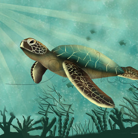 Olive Ridley Turtles Poster