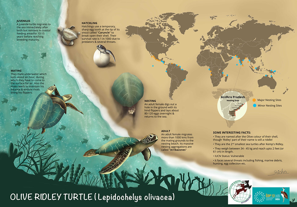 olive ridley poster.JPG