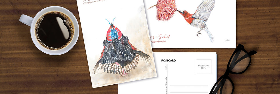 Bird Postcards (set of 6)