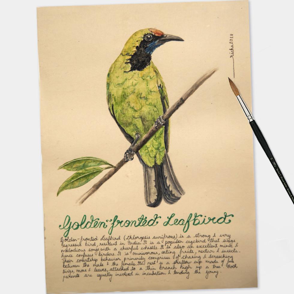 leafbird.jpg