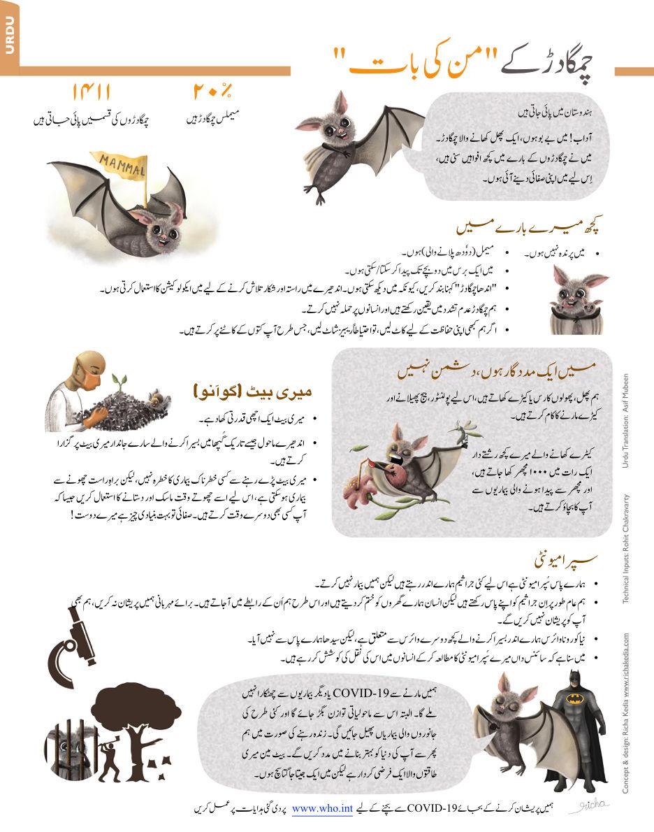 bat infographic urdu.jpeg