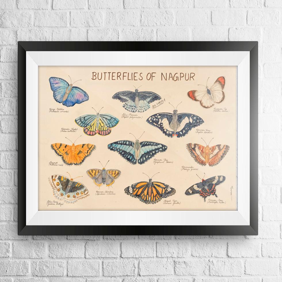 butterflies chart.jpg